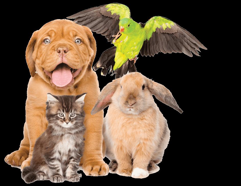 Zooplanet cibo animali