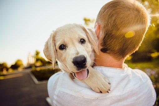 Un cane felice