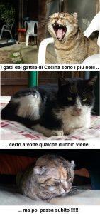 gatti_del_gattile