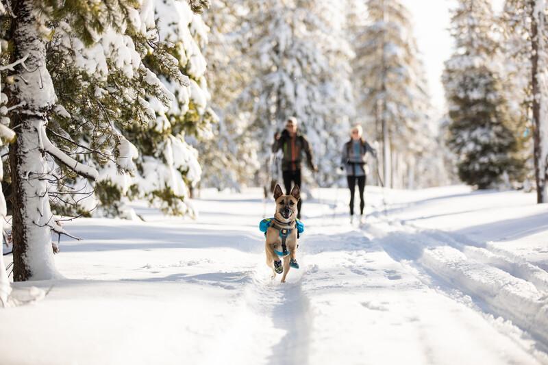 Proteggere il cane dal freddo