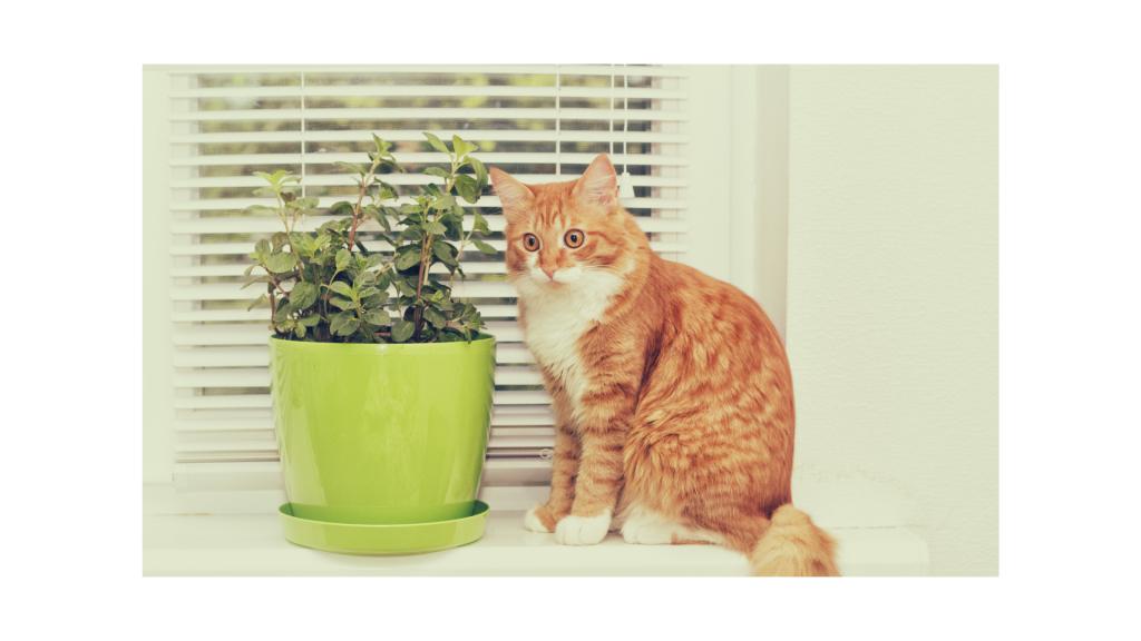 Piante velenose per il gatto