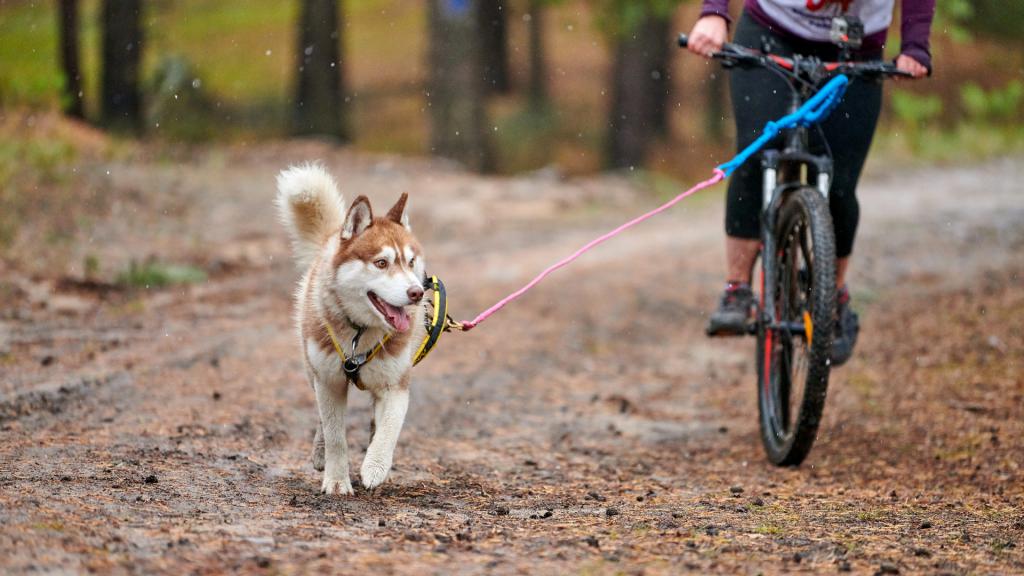 sport: bici con il cane al guinzaglio