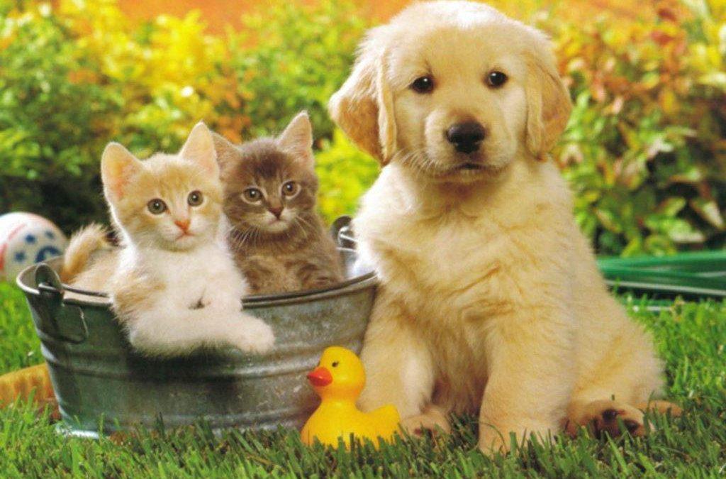 offerte per animali
