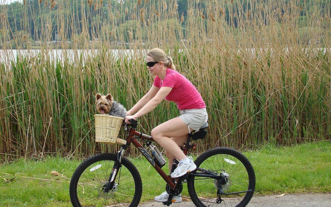 Attività da praticare all'aperto con il cane